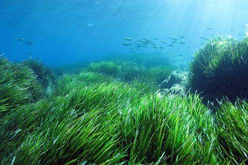Découvrir la Mer et la protéger