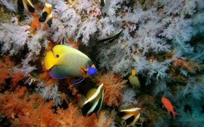 Plongée en Mer méditerranée : Faune et Flore