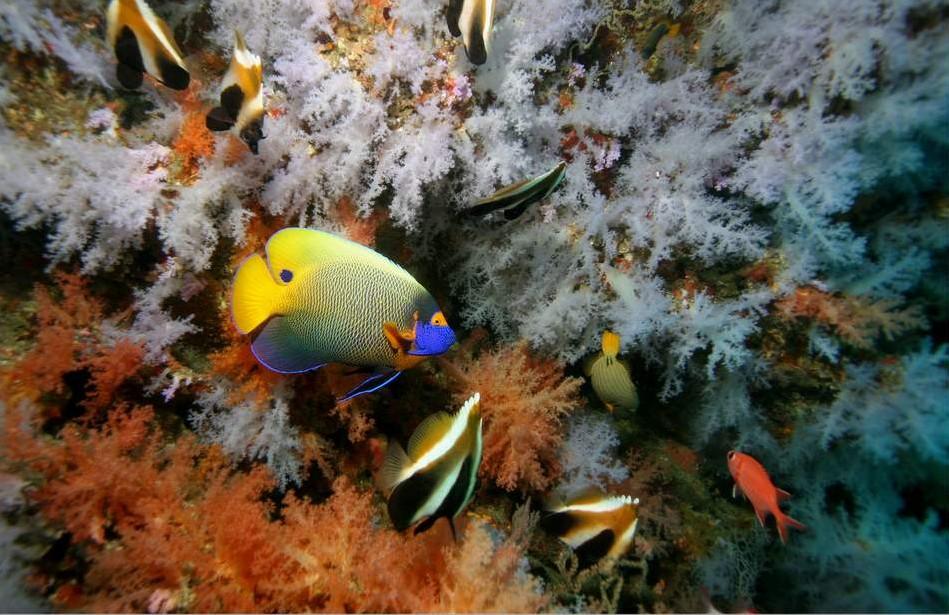 mer-plongee