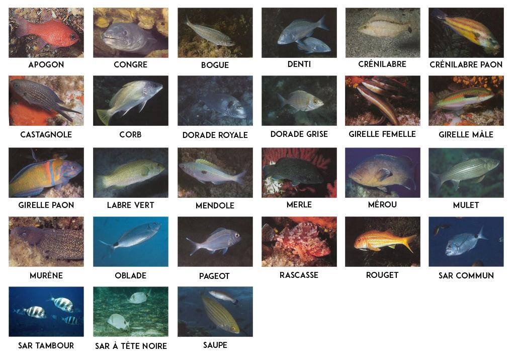 poissons-MEDITERRANEE-MER